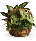 Emerald Garden Basket from Boulevard Florist Wholesale Market